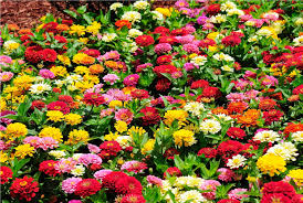 A Garden Of Flowers by 25 Types Of Flowers To Plant For Summer Summer Flowers