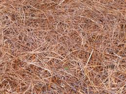 Garden Mulch Types - garden of aaron six reasons why pine straw makes the best mulch