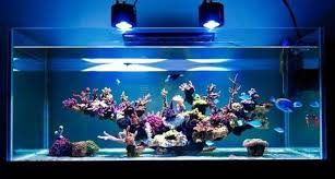 led reef lighting reviews led aquarium lighting in a reef tank how to select the right one