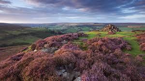 plants native to scotland landscape moor surprises u2013 from rare birds to carnivorous plants