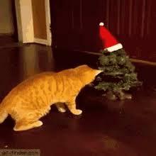Cat Christmas Tree Meme - cat christmas tree meme gifs tenor