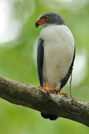 listbirds 67 best life list birds images on pinterest life list birds and