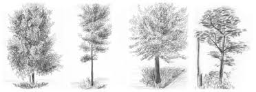 how to draw realistic bushes google search how to draw