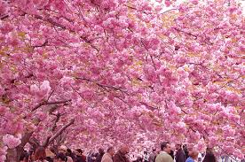 floral flowers nature pink pretty trees image 103077 on