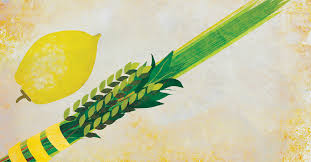 lulav and etrog for sale the lulav has played second fiddle to the etrog for