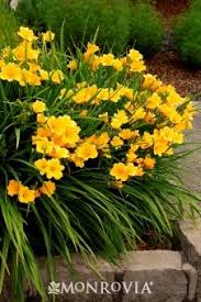 Learn More About Full Sun by 222 Best Deb O U0027s Gardens Images On Pinterest Flowering Shrubs