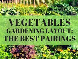 Best Vegetable Garden Layout Vegetable Gardening Layout The Best Pairings Loyalgardener