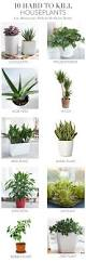 trendy indoor plants for low light at english ivy low light
