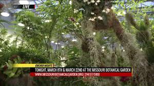 The Missouri Botanical Garden Missouri Botanical Garden Hosts Orchid Nights Fox2now