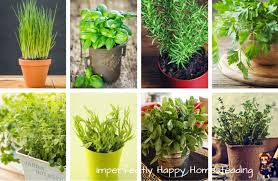 herbs indoors to grow 8 awesome herbs indoors all year long