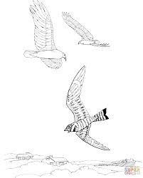 vultures coloring pages free coloring pages