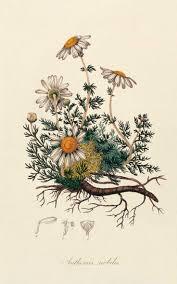 Flowers Designs For Drawing Best 25 Flower Design Drawing Ideas On Pinterest Pretty Flower