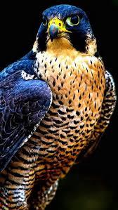 25 birds photos ideas pretty birds birds