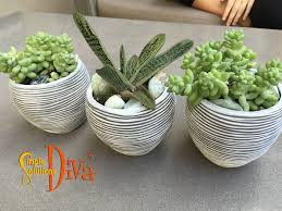 home decor trend succulents u2013 simplesolutionsdiva com