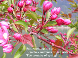 spring haiku my poetic path