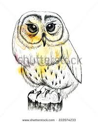 owl ink drawing stock images royalty free images u0026 vectors