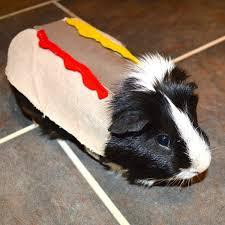 Halloween Costumes Pig Guinea Pig Halloween Costumes Guinea Pig Costumes