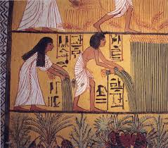 native plants of egypt ancient egyptian cuisine wikipedia