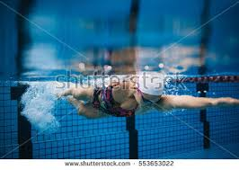 Inside Swimming Pool Swimming Race Stock Images Royalty Free Images U0026 Vectors
