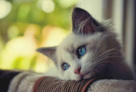 Sad Cat Meme - meme maker sad cat generator