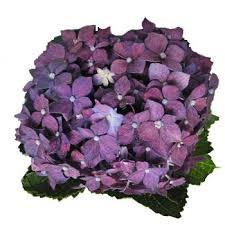 Purple Wedding Flowers 56 Best Purple Wedding Flowers Images On Pinterest Purple