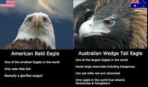 Aussie Memes - damn australia that hurts australia eagle and random