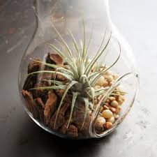 air plant terrarium light bulb moss twig touch of modern