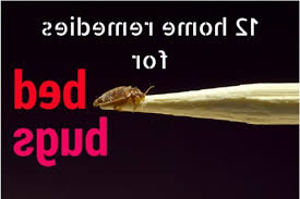 natural bed bug remedies 8 home remedies to kill bed bugs search home remedy pertaining