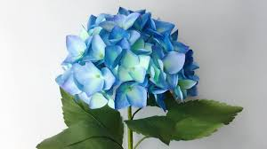 flower hydrangea abc tv how to make hydrangea paper flower from printer paper
