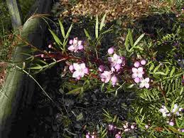 native plants nsw native plants
