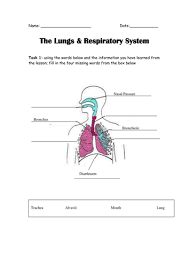 the lungs in the human body by elasticbandy teaching resources tes