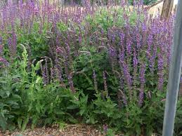 pruning native plants pruning and grooming the summer garden perennial favorites