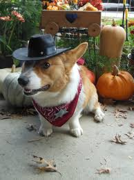 earthbound halloween hack story jean luc the dynamite dog halloween costume corgis corgi fairy