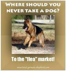 German Shepherd Memes - pin by dchev1 on wow gsds pinterest german shepherds dog and animal
