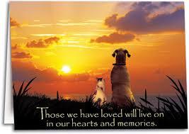 dog condolences my dog died last page 2