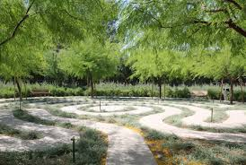 native plant nurseries sunnylands drought tolerant plants low water plants about