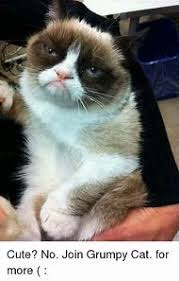 Birthday Meme Grumpy Cat - best 25 ideas about happy birthday grumpy cat find what you ll love