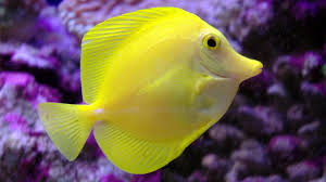 hd fish wallpapers download free 932138
