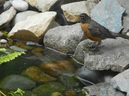 wildlife two fall river garden club