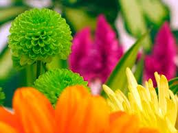 cheap flowers can flowers be cheap flower pressflower press