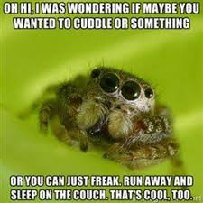 Friendly Spider Memes Image Memes - misunderstood spider image gallery spider meme and spider meme