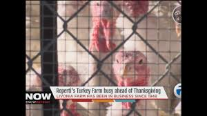 thanksgiving point farm hours business booming at livonia turkey farm in days before