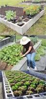 21143 best hometalk gardening images on pinterest backyard