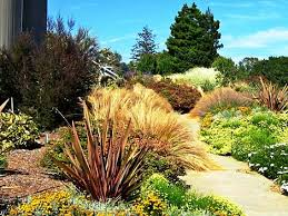 water loving to drought tolerant plants in the garden