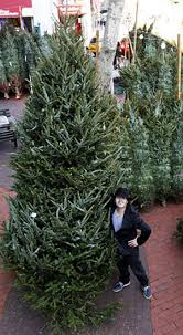 black friday christmas tree soho trees fir the low low price of 900 ny daily news
