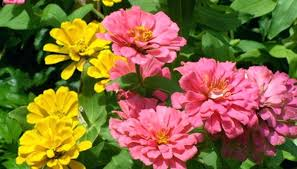 heat loving plants best flowers to plant in june these are a common prairie style