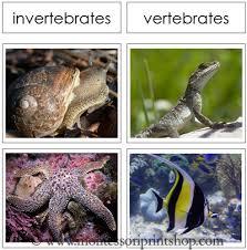 free printable worksheets vertebrates invertebrates vertebrate and invertebrate cards printable montessori animal