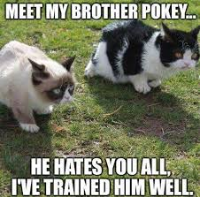 4675 best cats images on pinterest funny stuff funny animals and