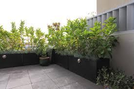 pflanzen f r balkon gallery of sichtschutz mit pflanzen balkon sichtschutz aus