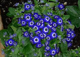 names of blue flowers list magiel info